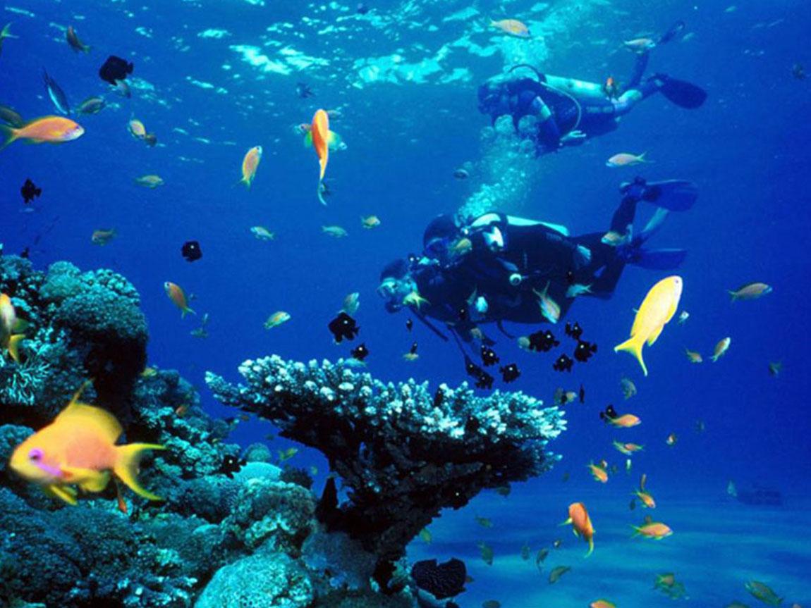 Bắt đầu lặn khám phá Hòn Mun xinh đẹp