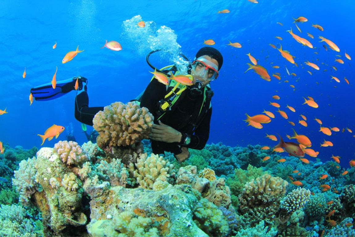 Lặn lần 2 tại Hòn Mun Nha Trang